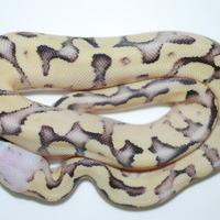 バニラスクリームのサムネイル